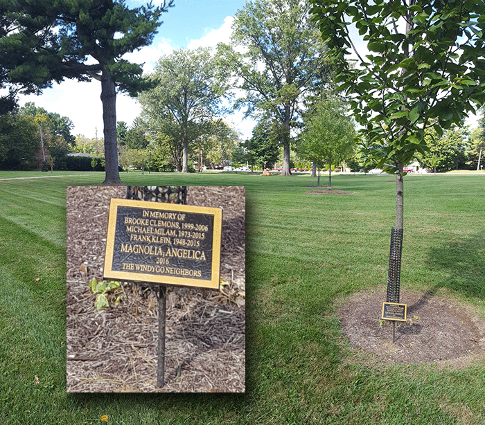 Trees and plaques: In Memory